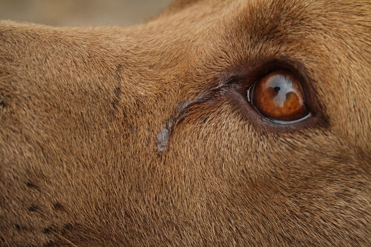 Ezt a kutyat nem lehet ketrecbe zarni 67 - Kegyetlen L Megcsonk Tottak Egy Kuty T