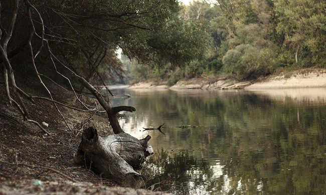 Rejtélyes körülmények között meggyilkolt férfit találtak a tónál