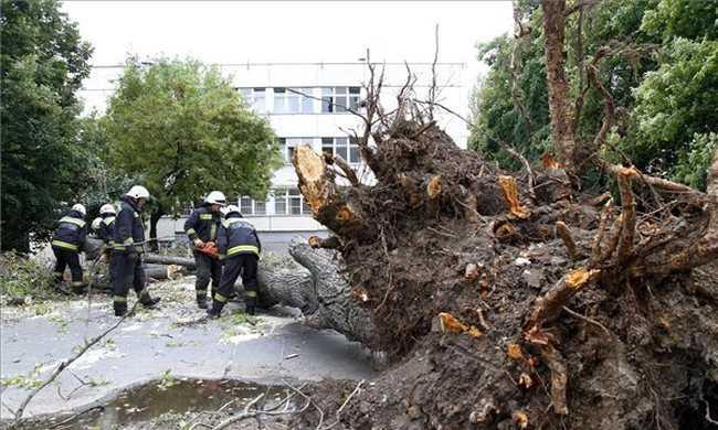 Kislányra dőlt a fa az iskola udvarán