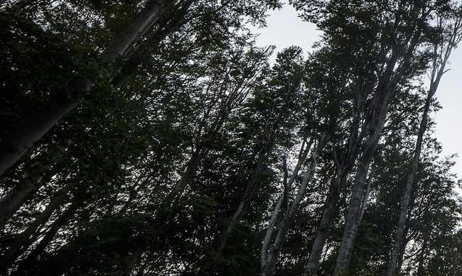 Több mint 150 program az erdők hetén