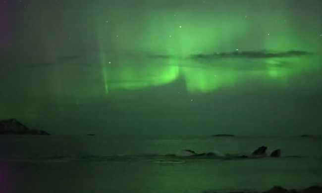 Videó: Bálnák játszanak az északi fény alatt