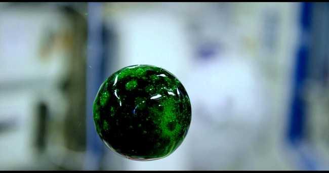 Így néz ki egy pezsgő vízlabda az űrben