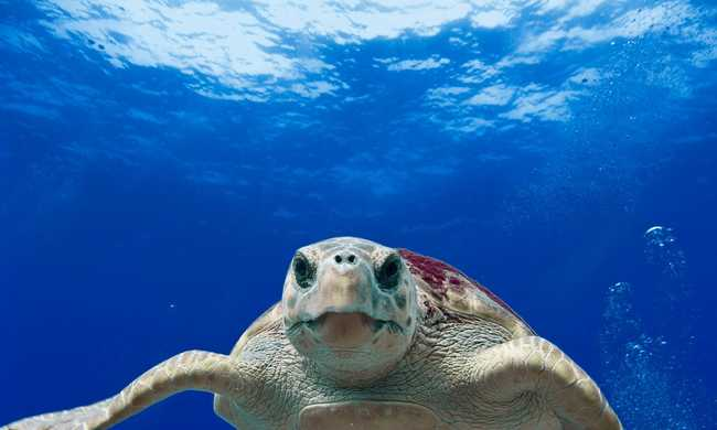 Különös dolgot találtak a tengeren úszó drog között