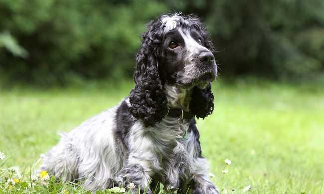 A kutya ürülékéből nyomoznák ki, hogy ki a gazdája