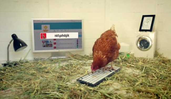Csirke a Twitteren