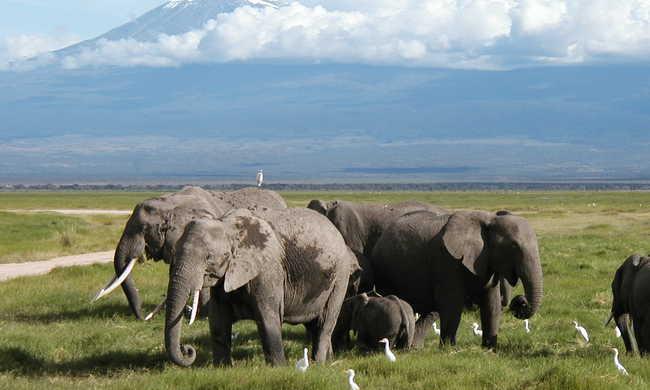 Elköltözik ötszáz elefánt
