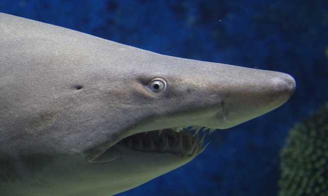 Hat cápát öltek meg az üdülőhelyen, így védik a turistákat
