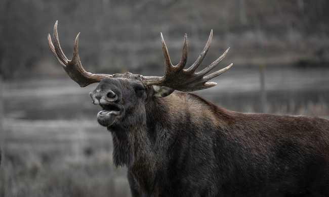 Norvég vadászok lövöldöztek egy állatkertben