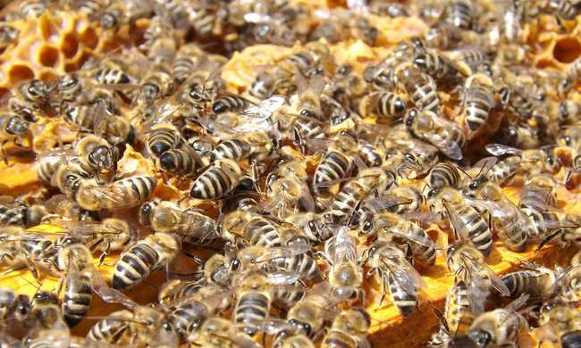 Rossz a kínai méz, tüntetnek a magyar méhészek