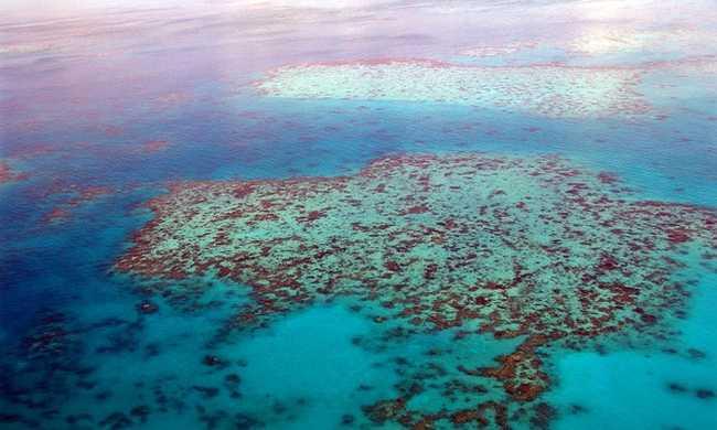 Védett korallokat pusztított el a Microsoft társalapítója