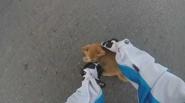Videóra vette a motoros, ahogy megment egy kiscicát