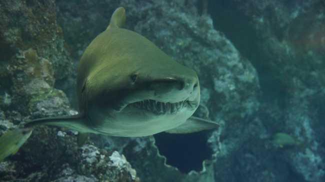 Cápavédelmi program Kubában
