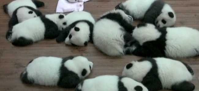 Hat pár iker panda született Kínában - videó