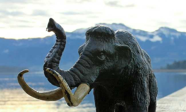 Autópályát építettek, mamutagyarat találtak