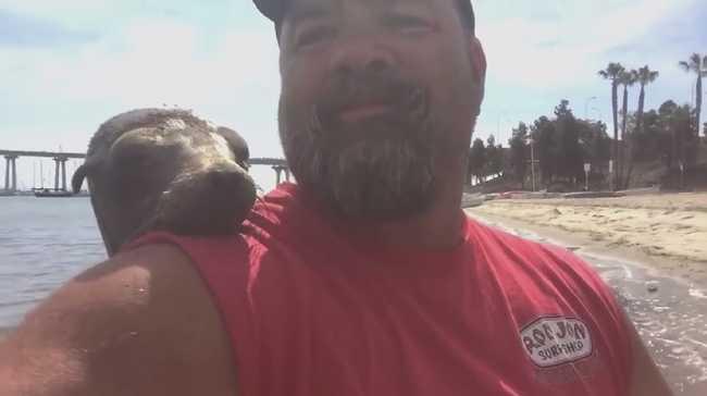 Ölelésre vágyott a fóka, beugrott a csónakba - videó