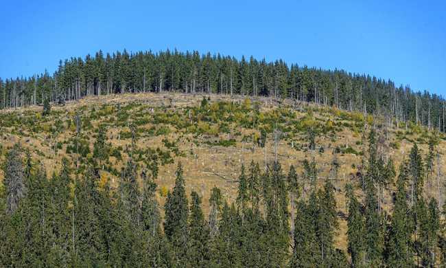 Eurómilliókért vágják ki a romániai erdőket