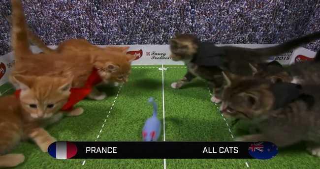 Itt a Cica Rögbi Világbajnokság! - videó