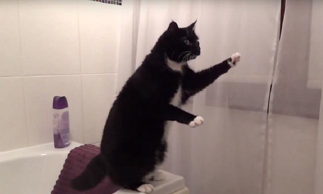 A cicájáról készített videót, így ki tudta fizetni a tandíját
