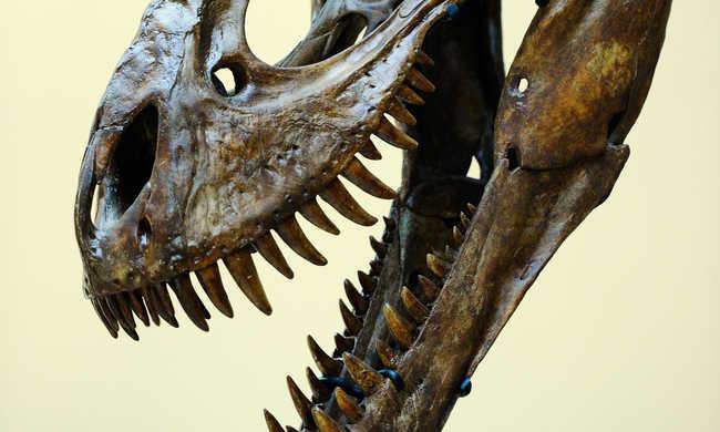 Meglepő dolog derült ki a T-rexről