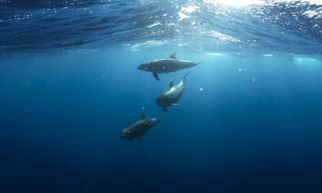 Delfinek pusztultak el Calais-nál