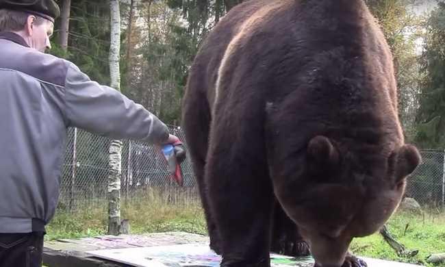 Csodás festményeket készít a barna medve - videó