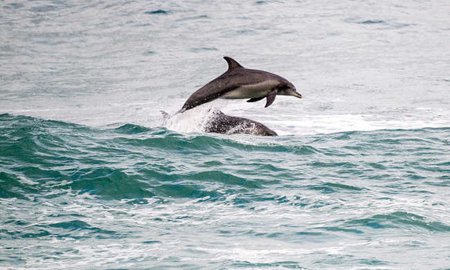 Delfinek sodródtak a partra