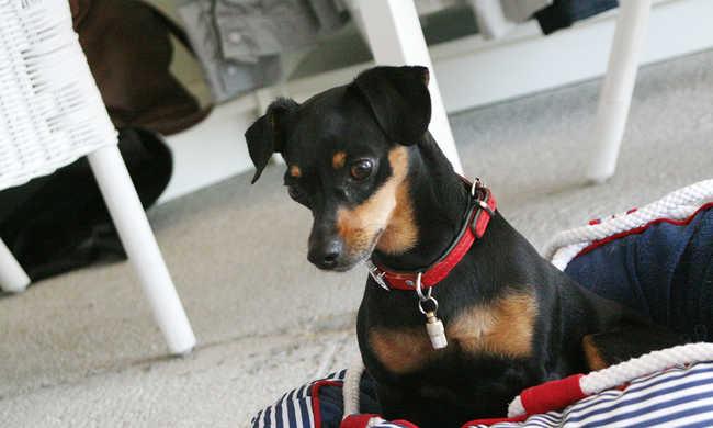Kutyakozmetika is lesz a kutyabarátok találkozóján