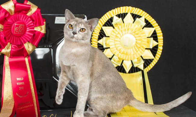 Magyar cica lett a legszebb a svéd versenyen