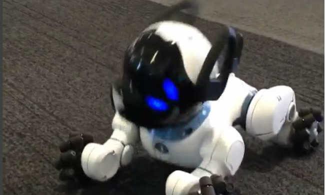 Magától aludni megy a legújabb robotkutya