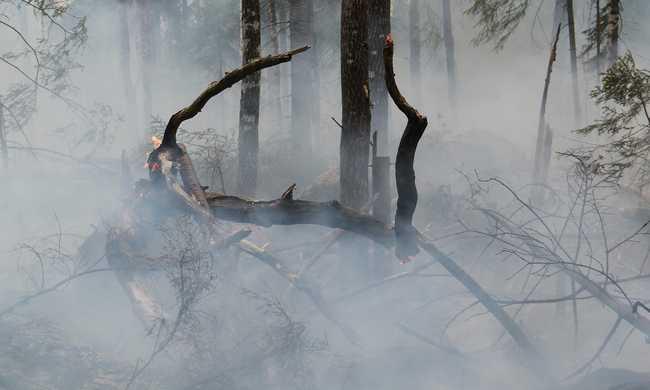 Elefántok oltják az erdőtüzeteket