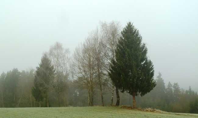 Babonás vandálok vágták le a fővárosi fasor fáinak kérgét