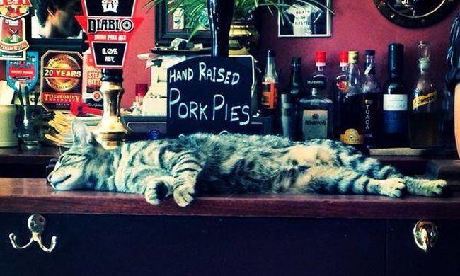 Macskák dorombolnak a vendégeknek a kocsmában