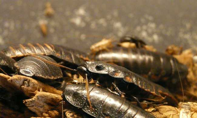 Száz különböző rovar él egy átlagos amerikai háztartásban