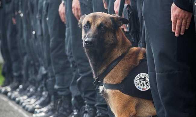 Kitüntetik a terroristák ellen harcoló rendőrkutyát