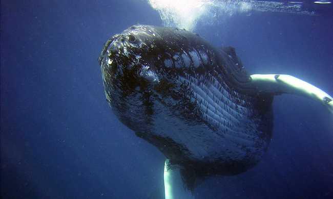 Egymillió dollárra büntették a bálnavadászokat