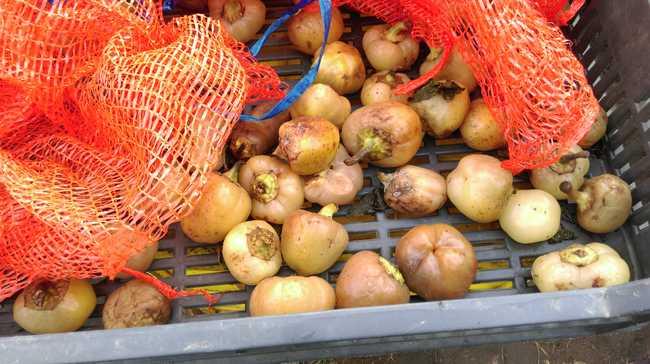 Gyanús zöldséget és gyümölcsöt árult