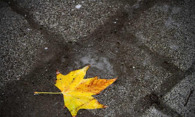 Fülledt és esős lesz a hét további része