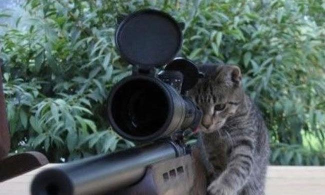 Macskákkal harcolnak a terroristák ellen