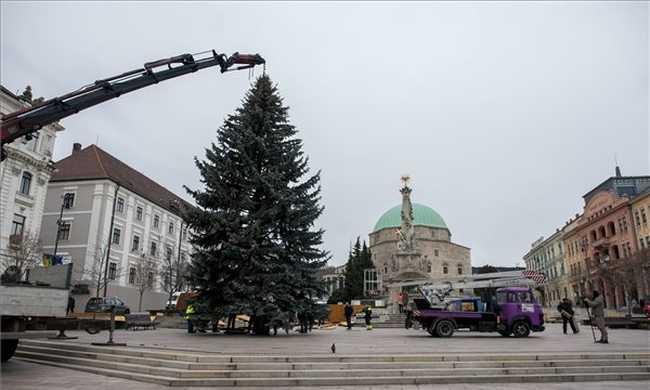 Óriás ezüstfenyőt állítottak Pécsen