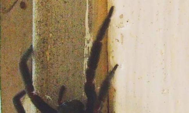 Egy pókkal kiabált a férfi, azt hitték, családon belüli erőszak