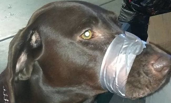 Leragasztotta a kutyája száját, mert zavarta, hogy ugat