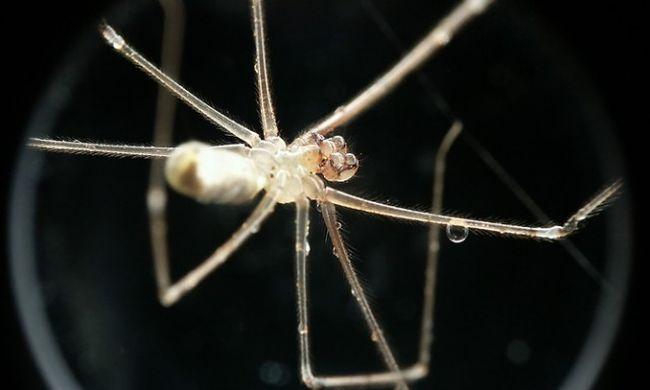 Miért félünk a pókoktól?