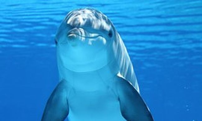 Delfineket vesz a védelmi minisztérium