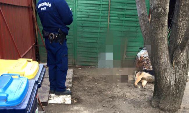 Nyíllal fejbe lőtték a kutyát, 650 ezerre nőtt a nyomravezetői díj