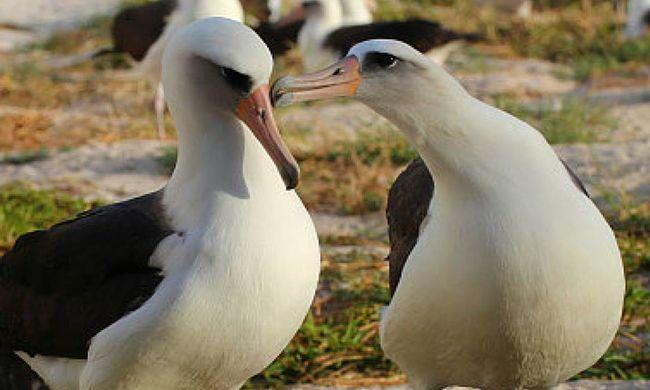 Tojást rakott a világ legöregebb vadon élő madara