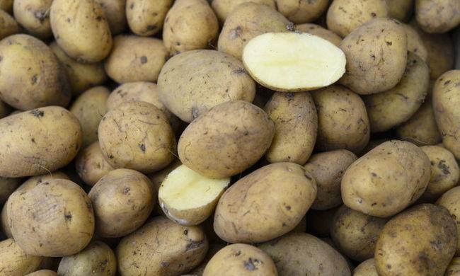 Valóra válhat az emberiség álma, krumplit termeszthetünk a Marson