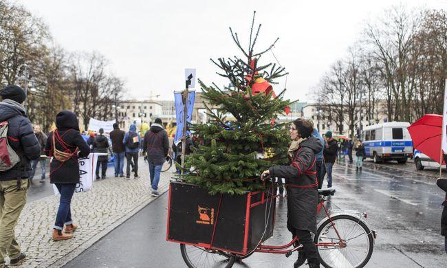 Így marad sokáig szép a karácsonyfa