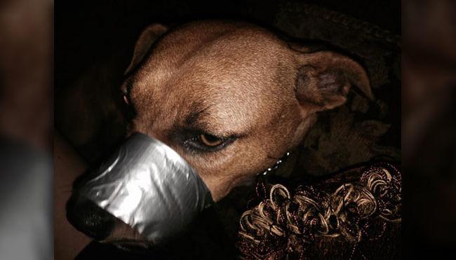 Elítélték a nőt, aki leragasztotta a kutyája száját