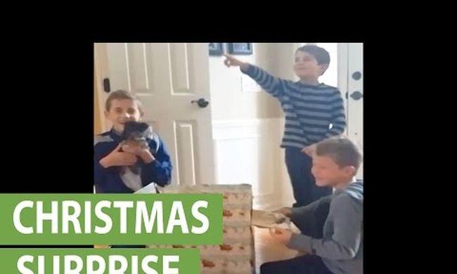 Elragadó: kiskutyát kapott ajándékba, elsírta magát a kisfiú