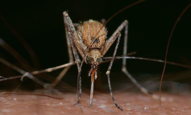 Félmillió alá csökkent a malária áldozatainak száma